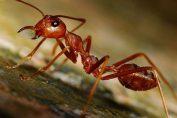formiche in casa rimedi naturali