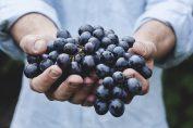 cibi acidificanti e cibi alcalinizzanti: uva